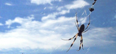German arachnophobia therapy may become standard