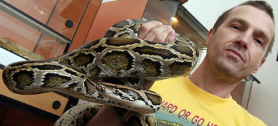 Posted pythons wreak havoc with German mail