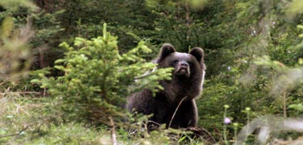 Jogger reports possible bear in Hesse