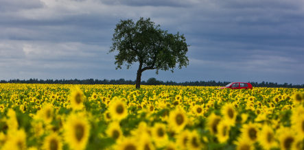 Summer to return to damp Germany
