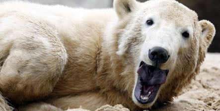 Citizens taxed thousands for ministry's Knut adoption