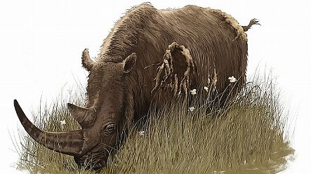 Woolly rhinoceros lived in Germany earlier than thought