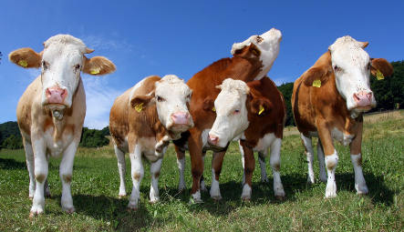 Agency says Germans should eat less meat