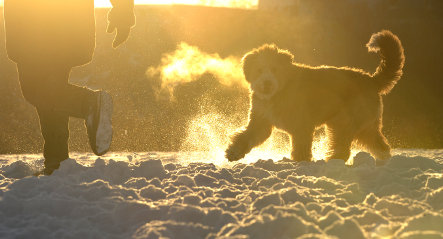 Germany wakes up to coldest day of winter
