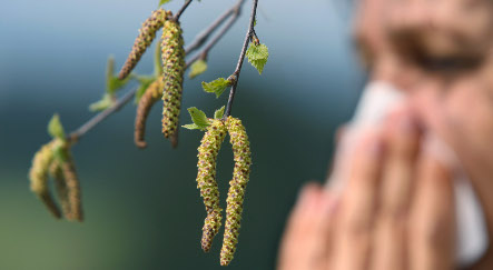 High-tech pollen forecasting aims to help allergy sufferers