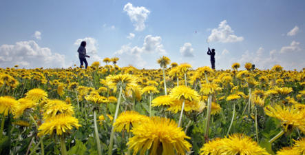 Summery spring spoils Germany with sunshine