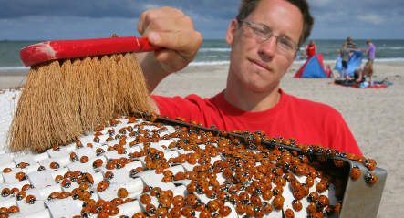 Ladybugs have northern Germany seeing red