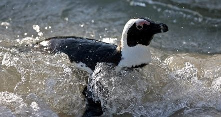 Police patrol called to check penguins' papers