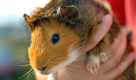 Fire fighters use night vision camera to save child's guinea pig