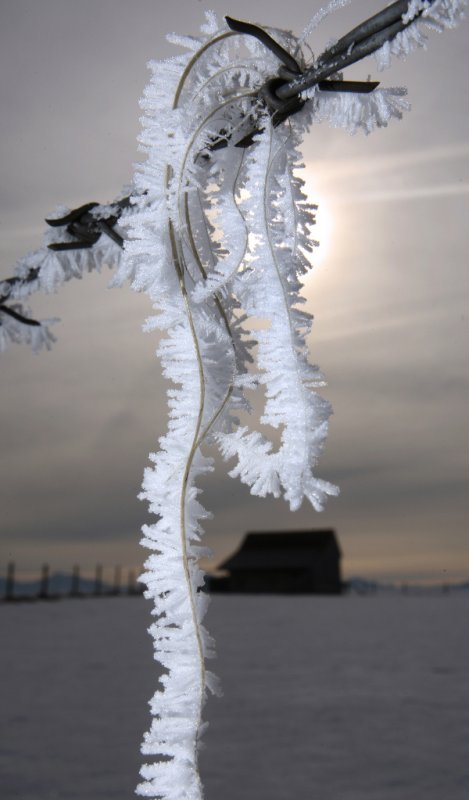 Animal hairs caught on barbed wire fence covered with frost in Osterried, January 24, 2010.Photo: DPA