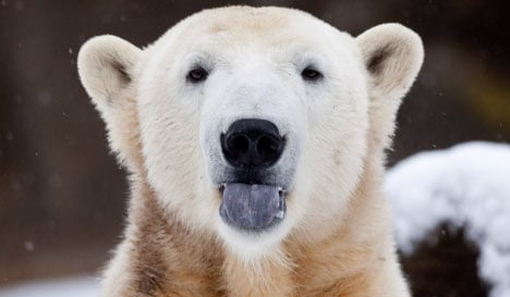 Let's keep our paws off Knut's balls