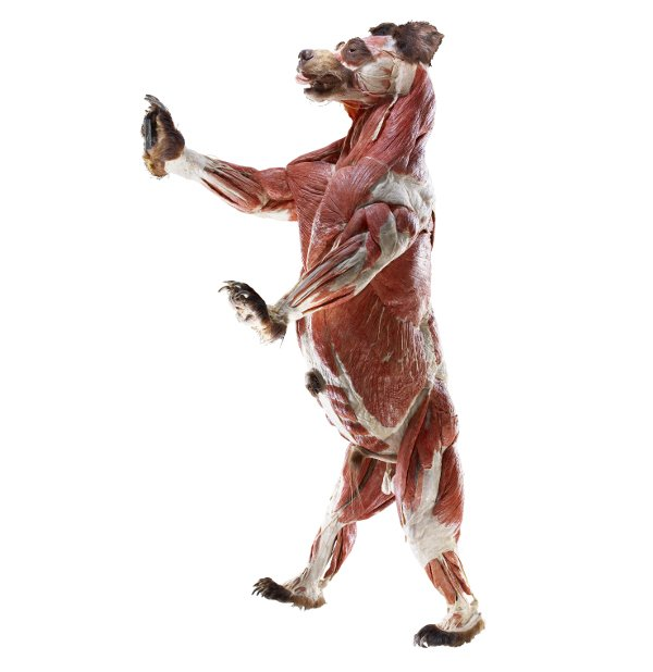 Body Worlds goes to the zoo
