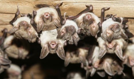 The Local's tips for bat conservation