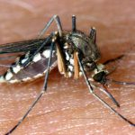 Insect experts see impending mosquito plague