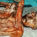 DNA tests to reveal secrets of the 'iceman'