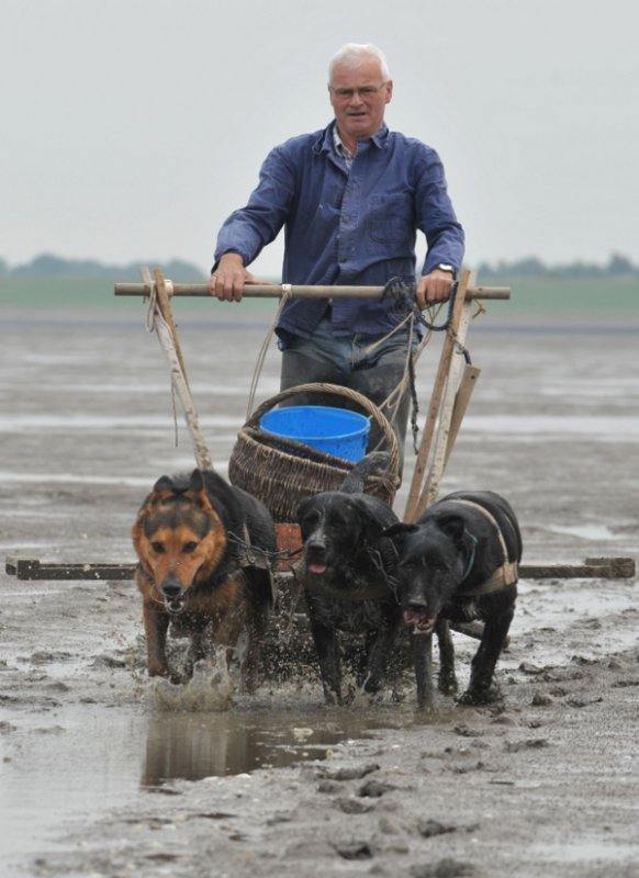 Water and mud spray in wide arcs behind the sled as they travel the two kilometres to their fish traps off the coast of Wremen, a tiny Lower Saxony fishing village along the <i>Wattenmeer</i>, or Wadden Sea. Photo: DPA