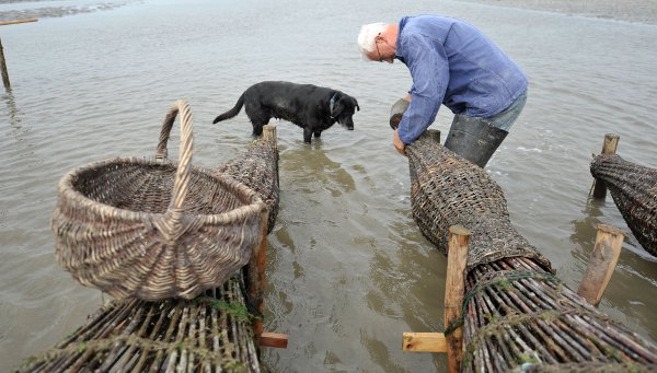 The trip takes the trio of dogs just 10 minutes, and Djuren checks his 30 round baskets, which lay aground at low tide.Photo: DPA