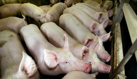 Pork farmers could get EU help on dioxin scare
