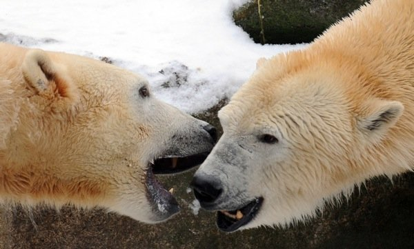 He also did not get along with other polar bears very well.Photo: DPA