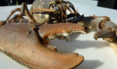 Lobster protection law could force better crustacean conditions