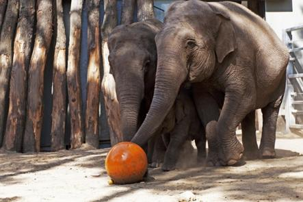 Other animal seers include seven other octopi and a ball-kicking elephant.Photo: DPA