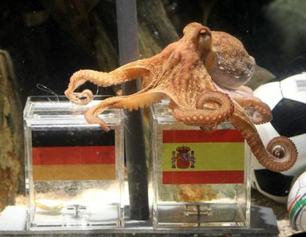 Paul the Octopus became famous in 2010 when he correctly picked the winners of several World Cup matches.Photo: DPA