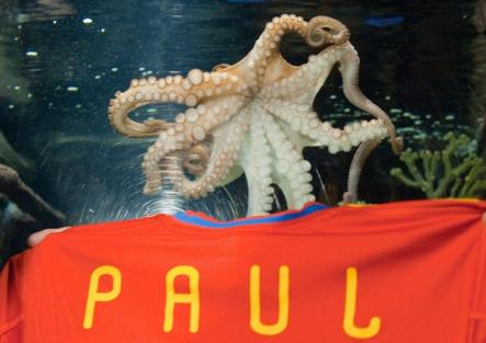 Paul became an object of intense curiosity in Germany and around the world. Television stations carried his predictions live.Photo: DPA