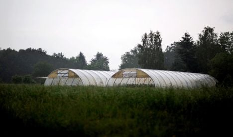Farm behind E. coli not likely to face prosecution