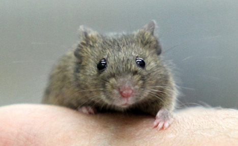 Pervert-pleasing high-heeled mice stompers convicted of cruelty