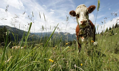 Website offers cow killing options for tastier beef