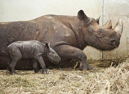 The lovely female was born in the early hours of Christmas Eve to the delight of keepers. Photo: Magdeburg Zoo