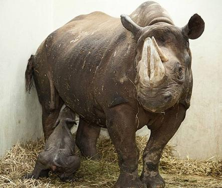 The pair are being kept away from the curious for the time being. But they can be watched on closed circuit video. Photo: Magdeburg Zoo
