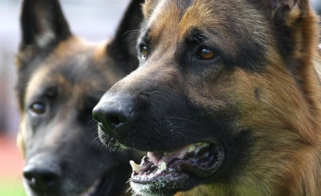 Dog attack victim tries to save owner's life