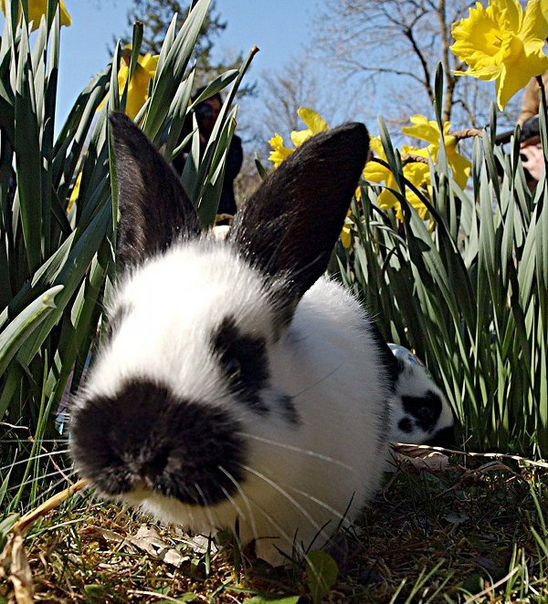 Alter Hase<br>The term <i>alter Hase</i> or 'old rabbit' is used to describe someone who oozes experience and has been in their industry forever. For instance Irish TV veteran Terry Wogan.Photo: DPA