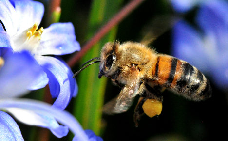 Bee rustlers cause a buzz after two stings