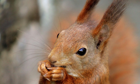 Family found squirrelled away in a road sweeper