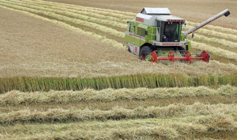 Weather and mice hit grain harvests