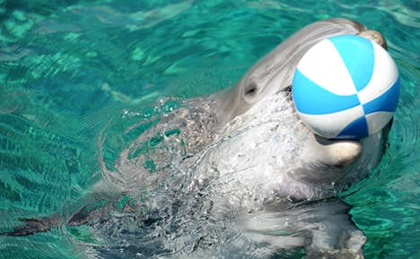 Dolphins need new home as small, old one closes