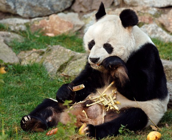 Sitting up to eat is okay...Photo: DPA
