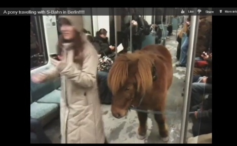 Berlin's YouTube pony had grand day out