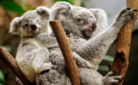 Chilly economic climate and weather hit zoos