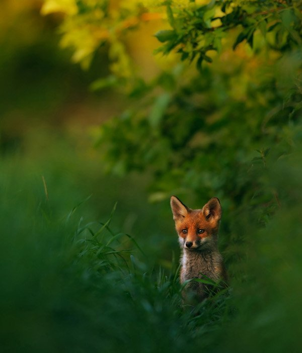 German Nature Photographer of the Year 2013