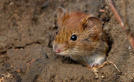 Mice games reveal why we sell out our morals