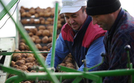 Cold, wet, spring pushes potato prices up