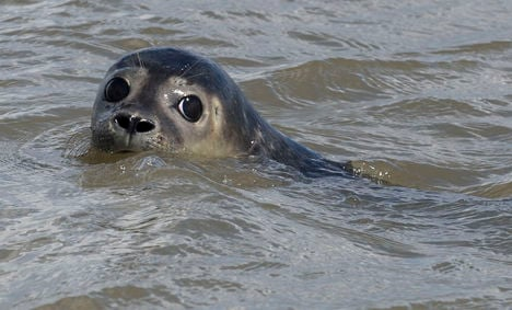 Rescued seal pups swim to freedom – pics