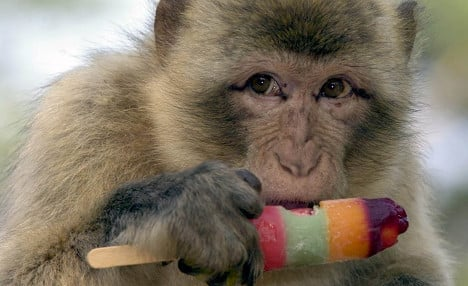 Keeper catches last monkey of escaped trio