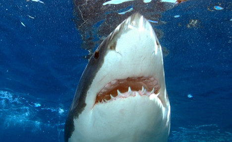 Shark attack victim fights for life