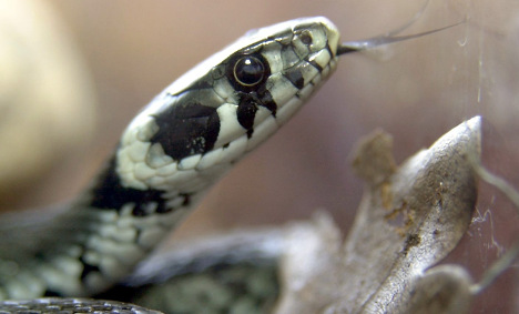 20 dead snakes found in bag, live ones on train