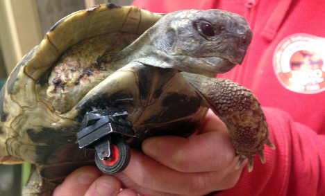 Bionic tortoise on a roll with Lego wheel