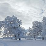 Snow-covered beech trees in Baden-Württemberg's Black Forest.Photo: Winfried Rothermel /dpa